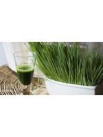 Натуральный хлорофилл: применение, польза и вред