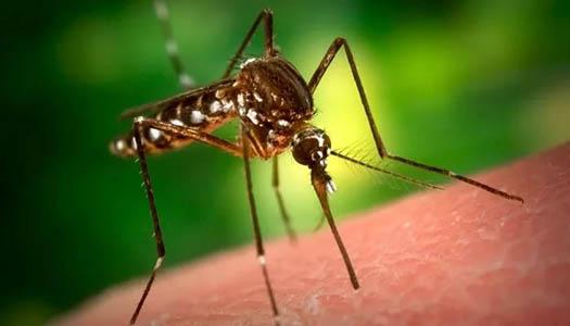 Тайский мятный бальзам лучшее средство при укусе комаров